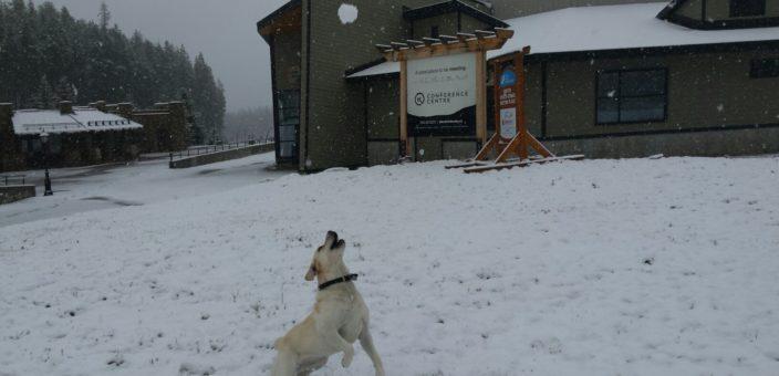 Kimberley Alpine Resort Opening Day